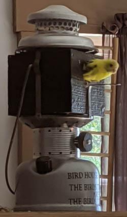 birdhouselanternmerzwithparakeet